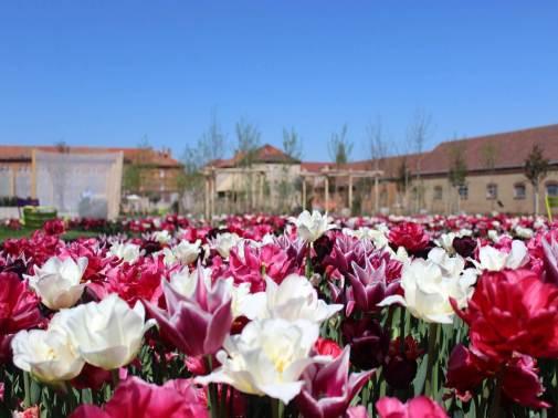 LGS Blumen mit den Kasernen