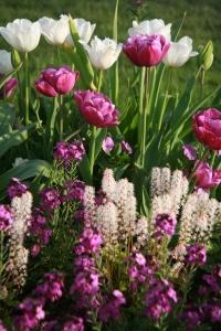 LGS Blumen
