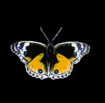 animal-1299817_960_720