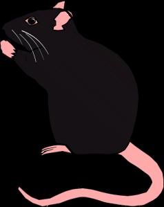 rat-1295327_960_720